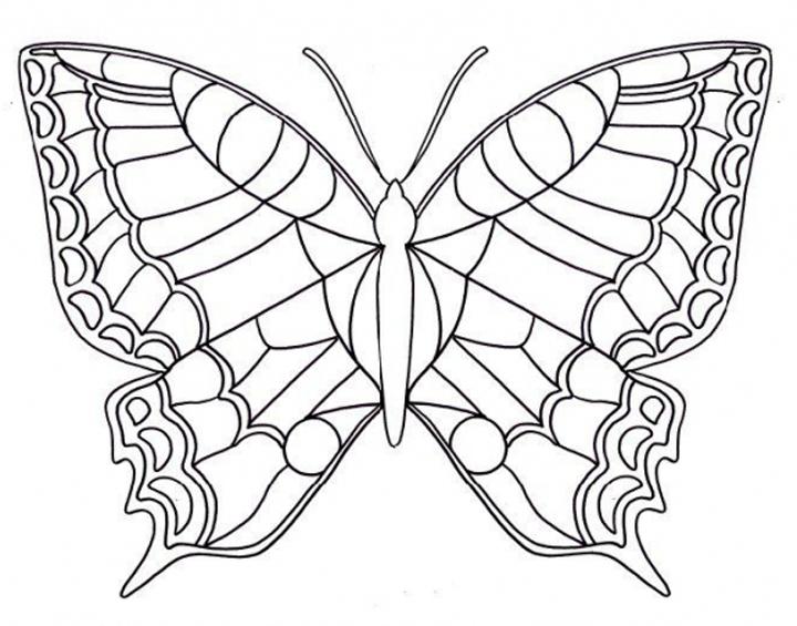 vlinders quot thuisschool quot