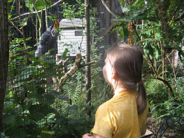 bij de papegaaien